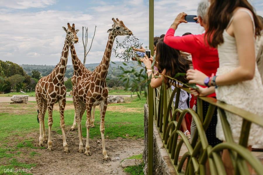 boda-africam-safari-puebla-477