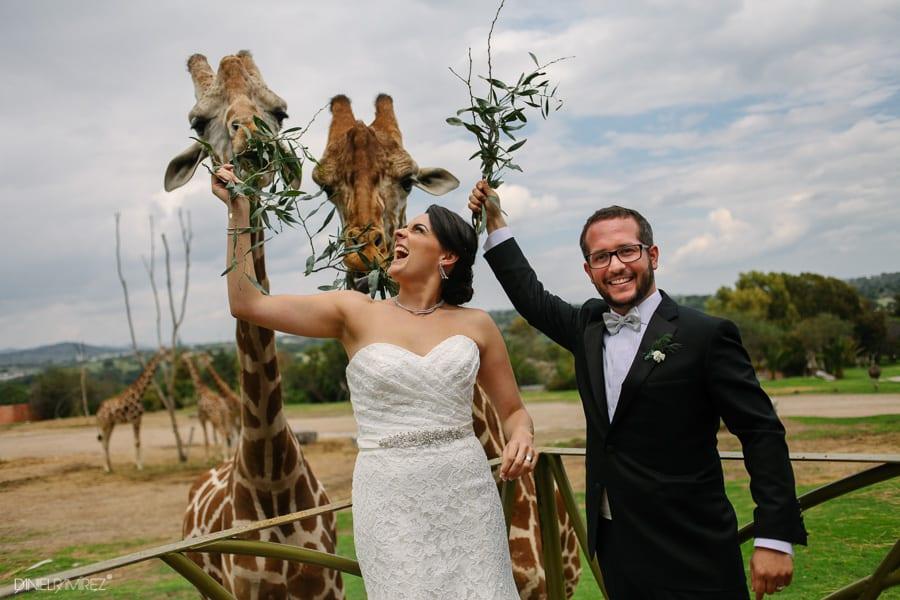 boda-africam-safari-puebla-494