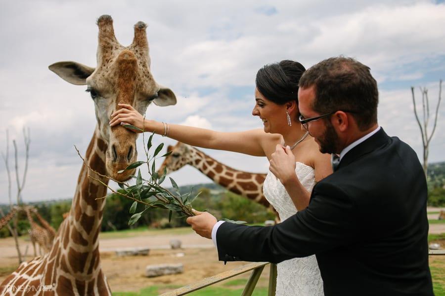 boda-africam-safari-puebla-500
