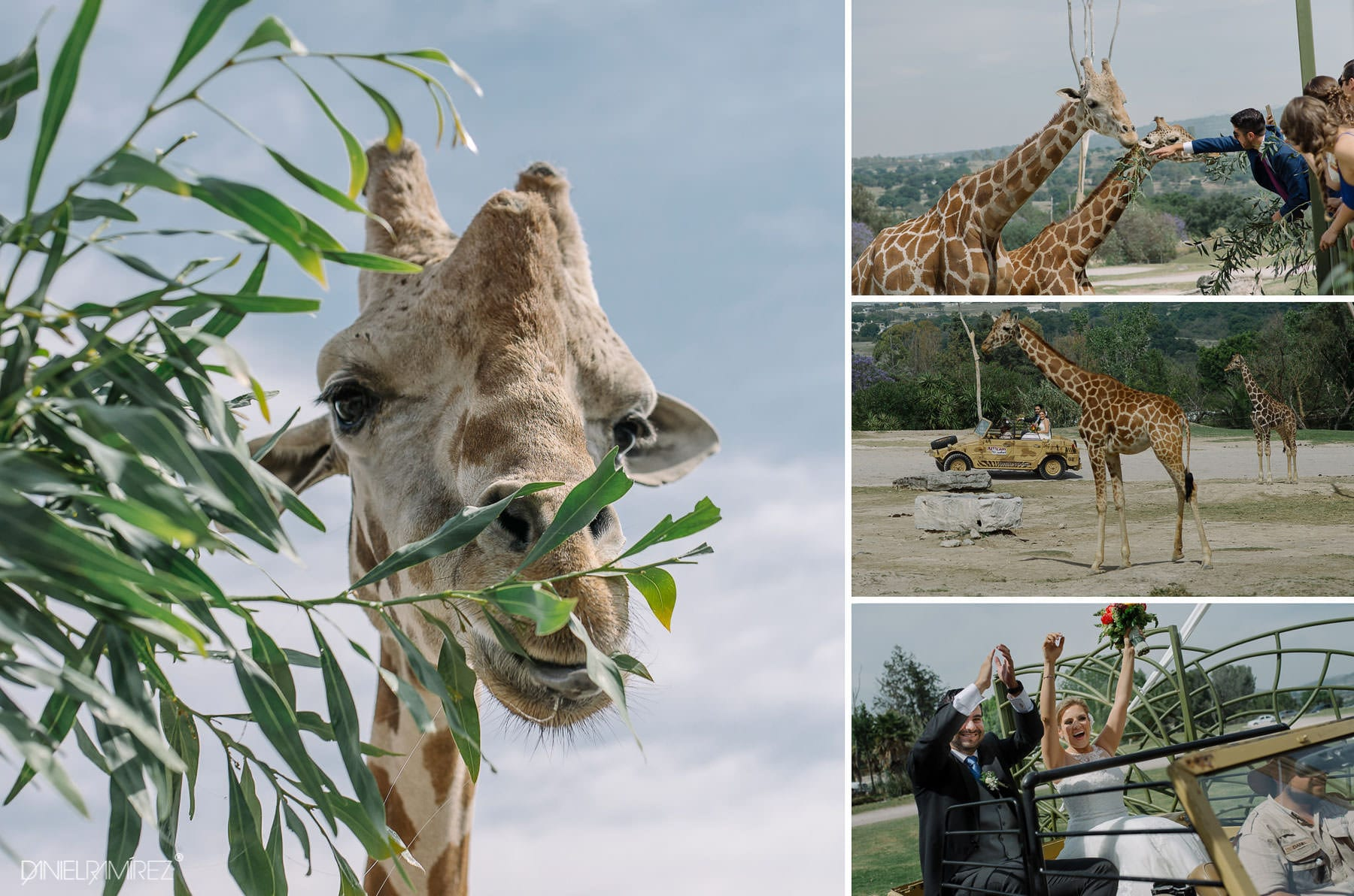 bodas con jirafas