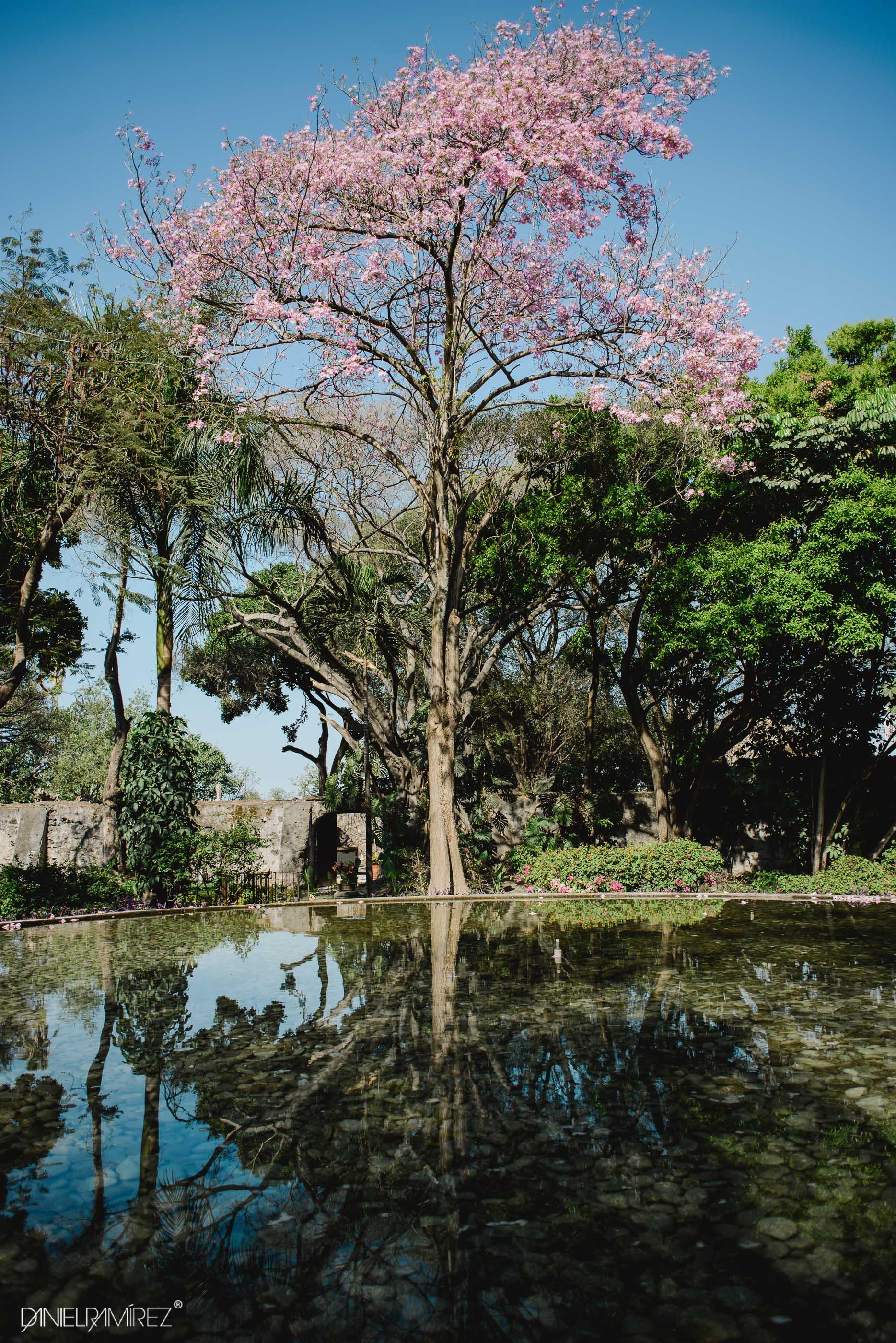 fotos jardines chiconcuac